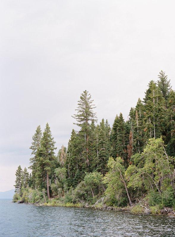 Trees and Lake Tahoe