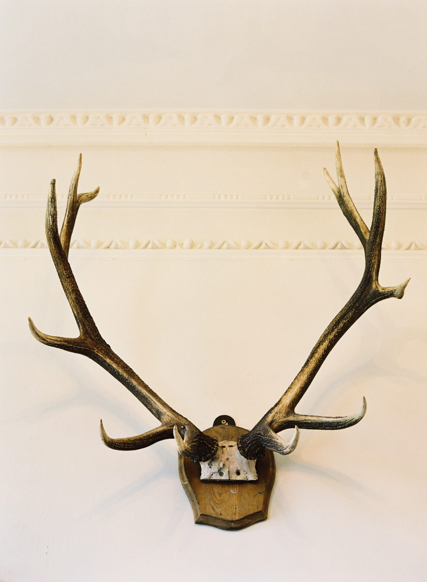 Bellinter House wall antlers