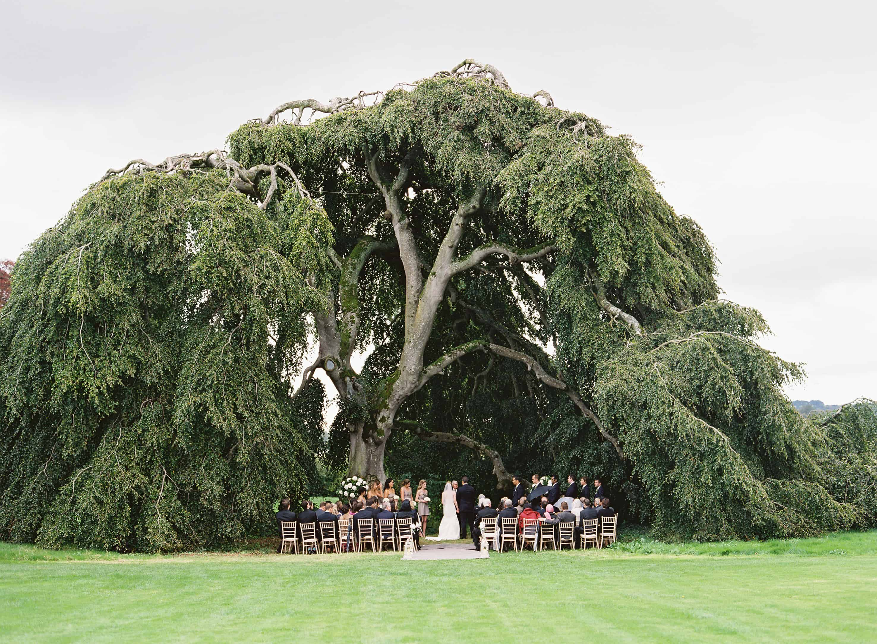 Ireland destination wedding ceremony under a big tree