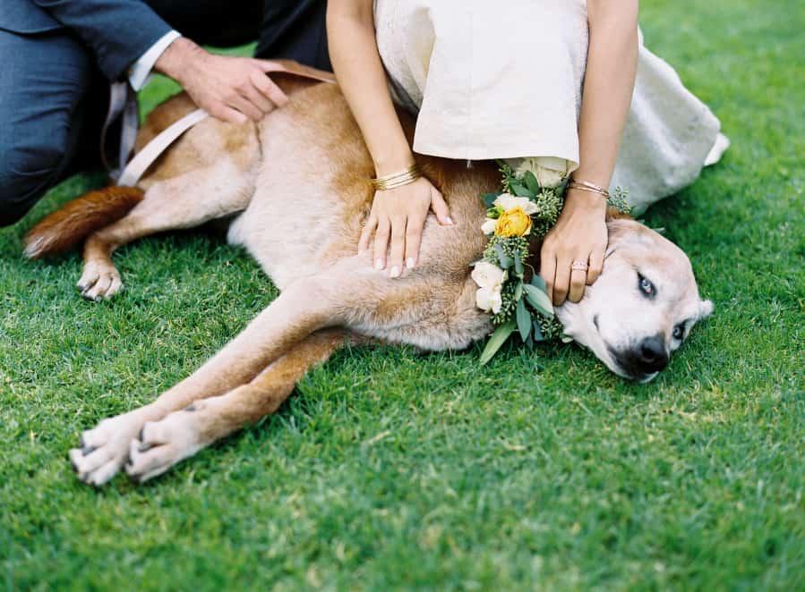 blue eyed dog with flower collar
