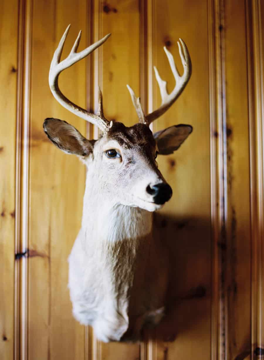 mounted buck head
